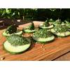 Raw Vegan Nettle Superfood Pesto Recipe thumbnail image