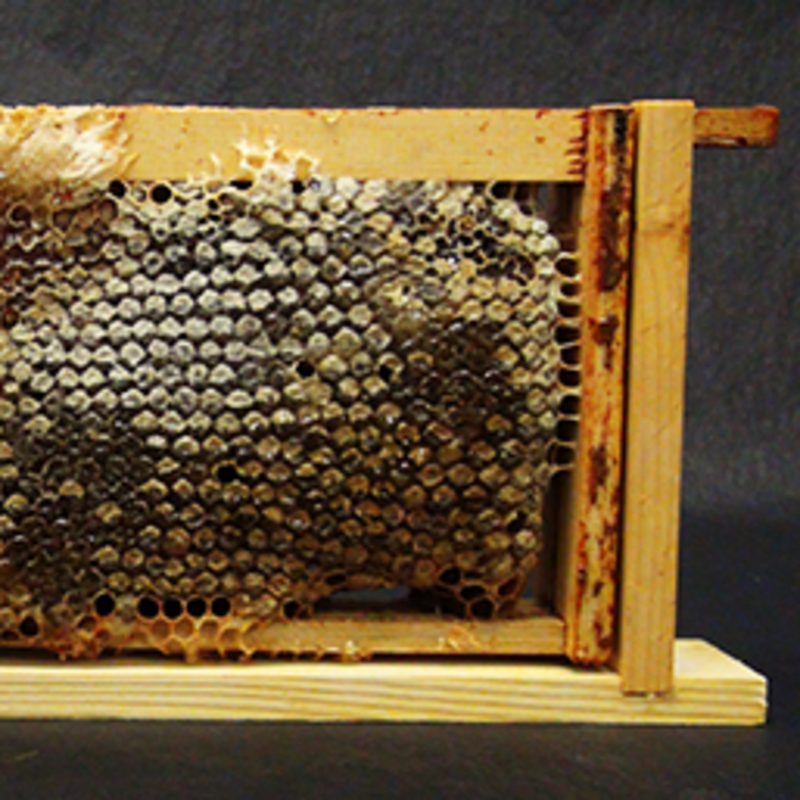 Plan Bee - Honeycomb
