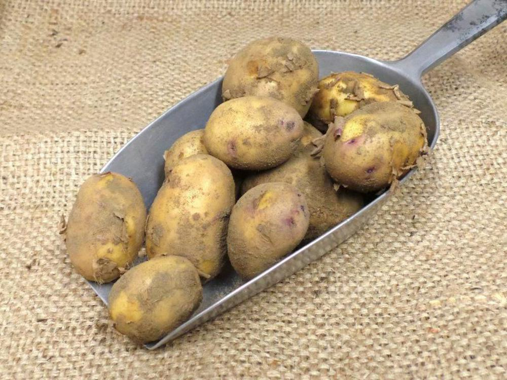 Potatoes-organic-Real-Foods