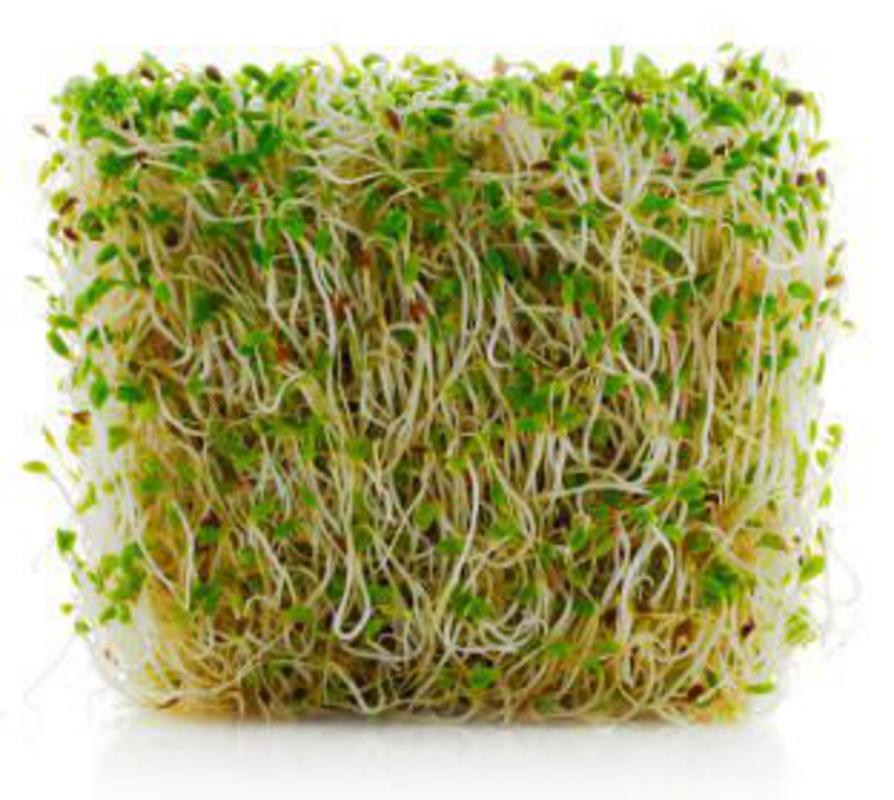 Real-Foods-Raw-Food-Explained-Sprouts-Alfalfa