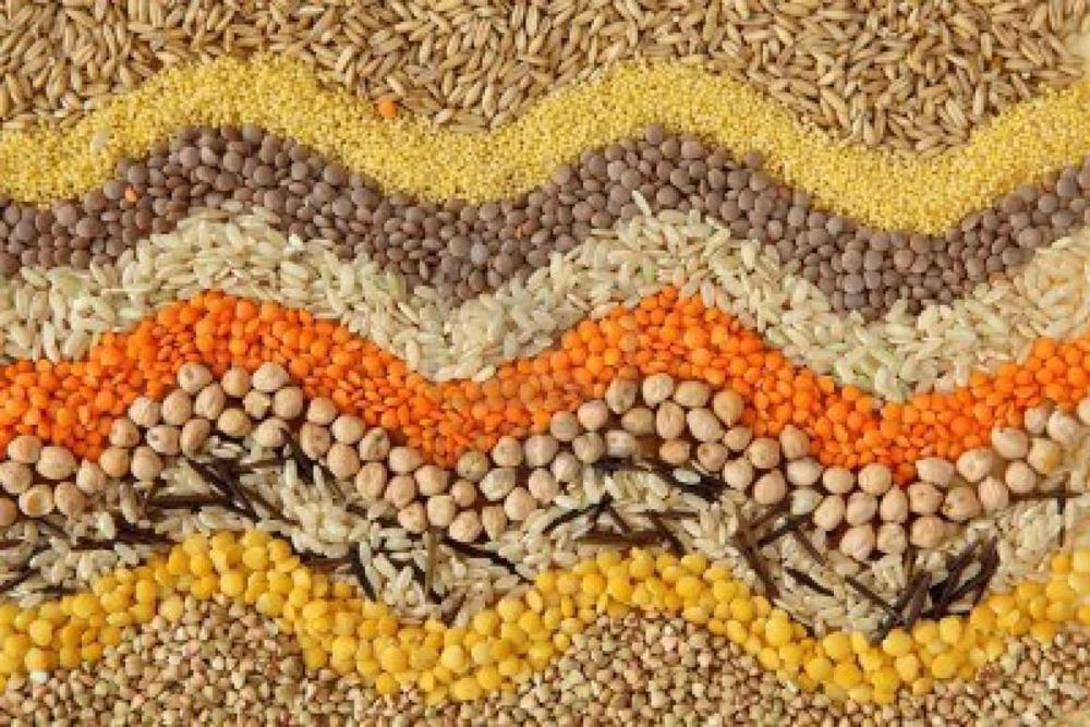 The Real Foods Guide to Grains