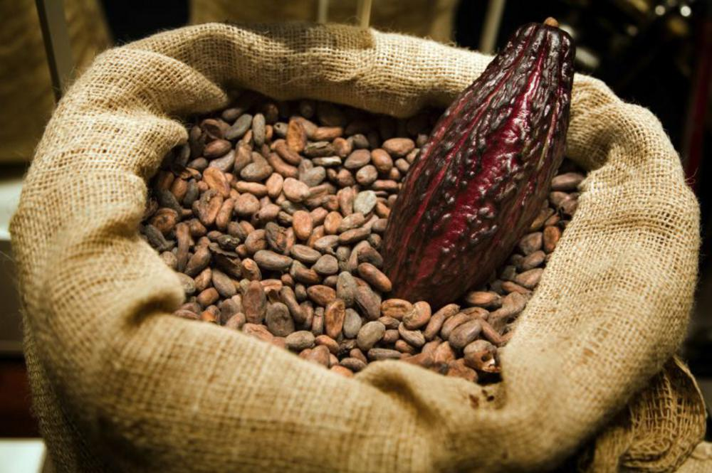 Why can't I buy the raw Ecuadorian cacao