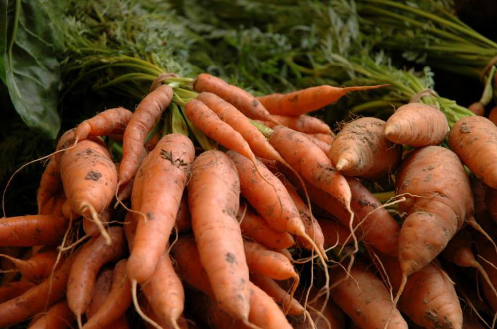 Bunches of delicious organic new carrots from Real Foods